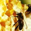 Как определить подделку мёда